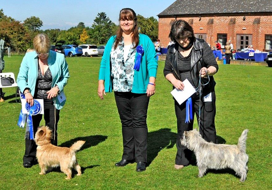 English Toy Terrier Record Book Judging or Stewarding Dog Show Show